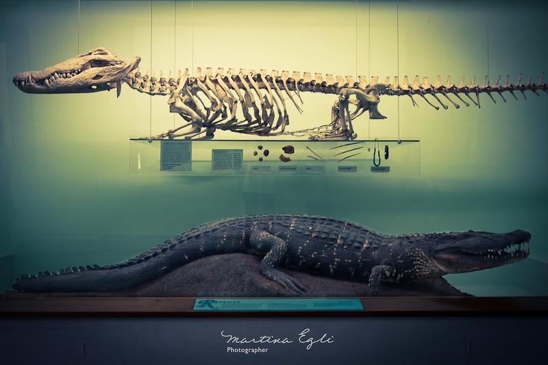 Crocodile vs Crocolog