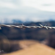 Barbed Wire with an out of focus background.