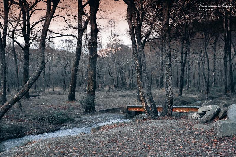 In A Dark Dark Forest…