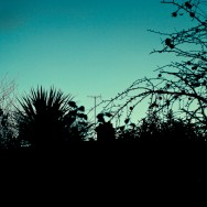 A silhouette of trees and bushes against a dark turquoise sky.