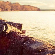 A log on the shore of Loch Lomond.