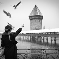 Woman feeding birds at Lake Luzern