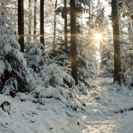 A path of light illuminates a winter forest.
