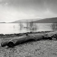 A burned log on the banks of Loch Lomond.