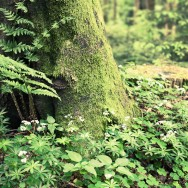 A tree covered in moss, surrounded by green leafy plants