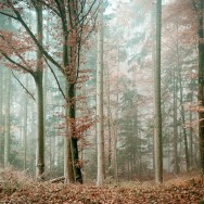 A misty forest in the autumn