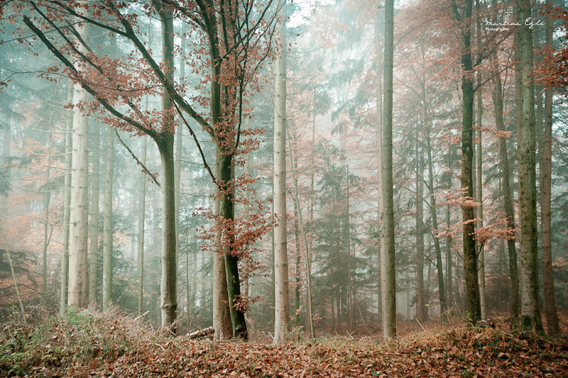 The Forest #1