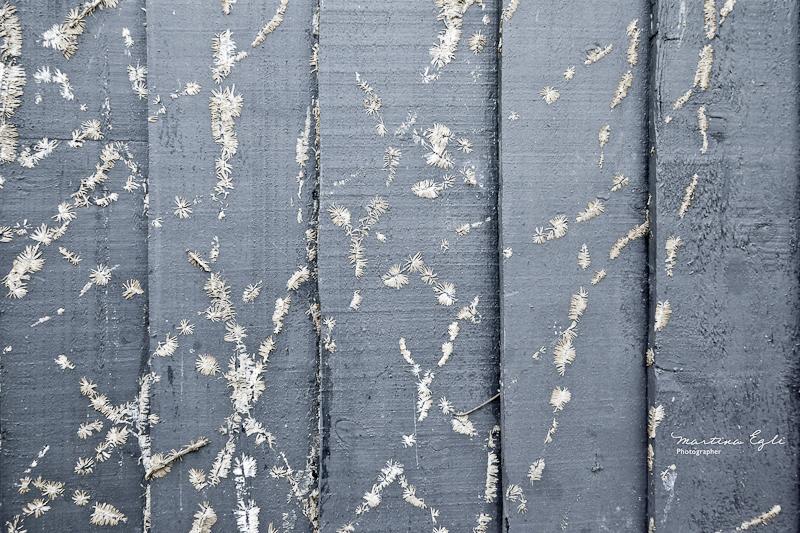 Texture #5: Fragile