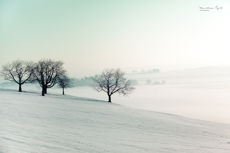 Bare trees in a wintry landscape.