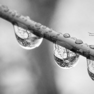 Water drop on a branch