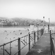 Pigeons flying off a jetty at lake Lucerne