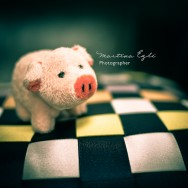A cute little piggy on a cushion