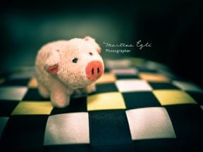 A cute little piggy on a cushion