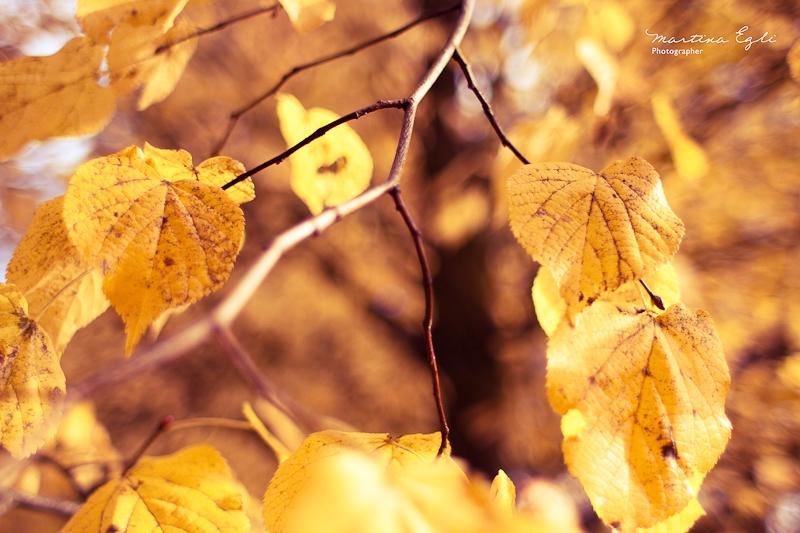Autumn Arrives