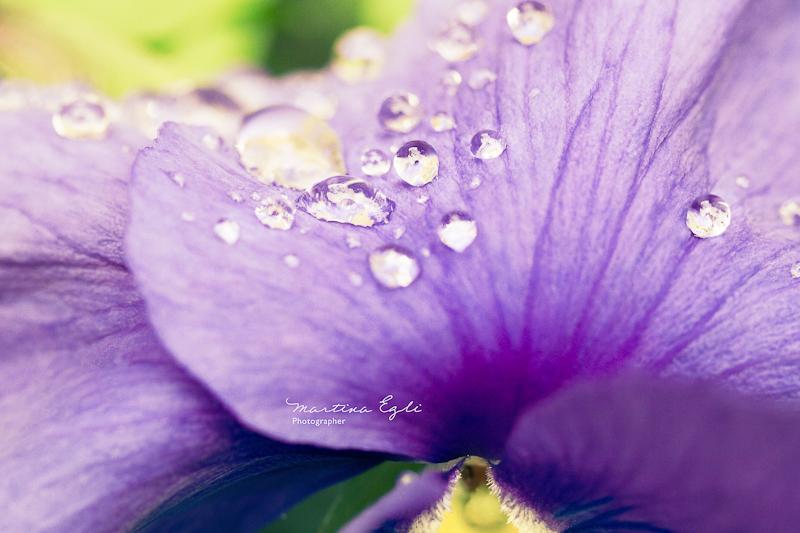 Rain drops on a flower.