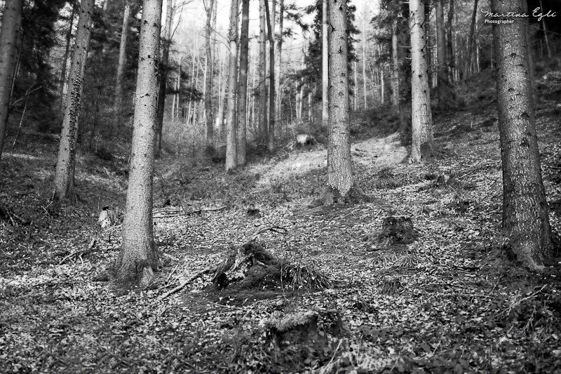 The Dark Forest…