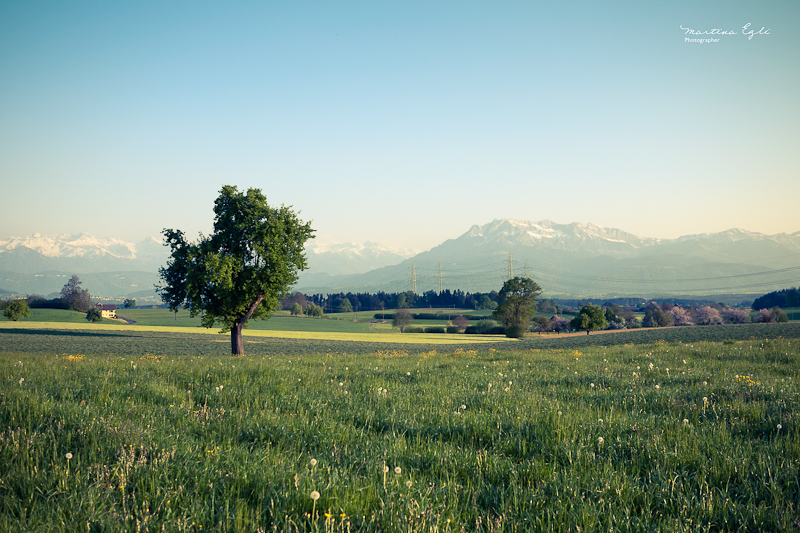 A meadow in Switzerland, the Rigi mountain in the background.