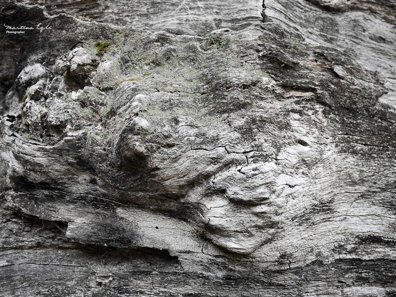 Texture #1: Ancient Oak