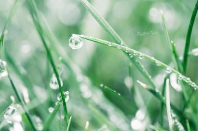 A water droplet on a blade of grass.