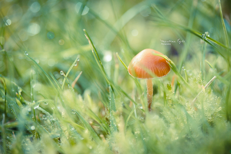 A small fungus and grass with dew.