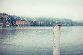 A bird sitting on a mooring pole on the shore of lake lucerne on a misty morning in autumn.