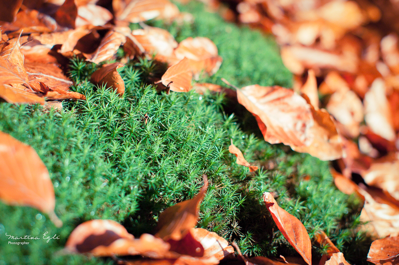 Moss and leaves on the forest floor in autumn.