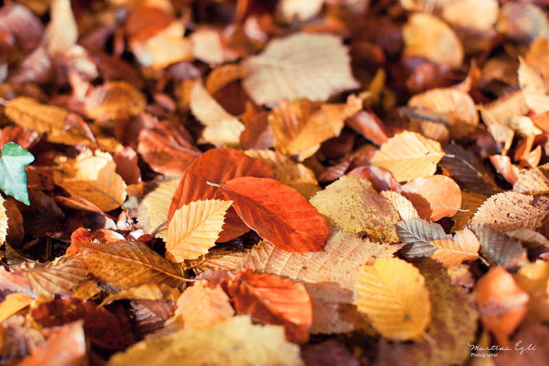 Fallen leaves on the forest floor in autumn.