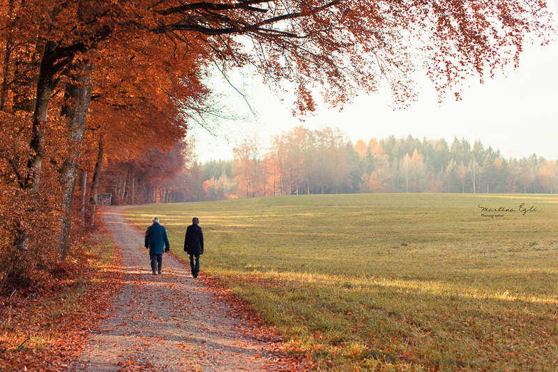 Two walkers on a path along a forest in autumn.